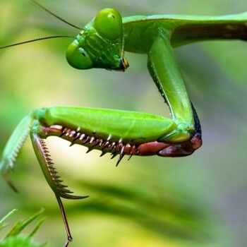 Alien Insect Chirping